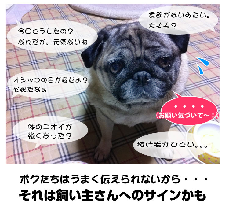 ペットが元気がない、体調不良は、飼い主さんへのサイン
